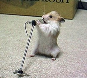Baby-Funny-Mouse-Singing-Song.jpg